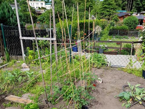 Mein DIY-Tomatengerüst in der Kleingartenanlage.
